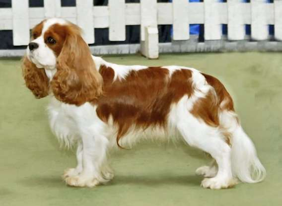 38. Which dog breed is this?