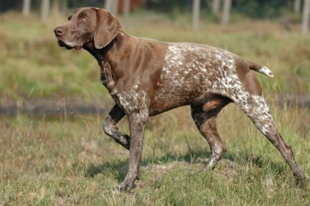 39. Which dog breed is this?