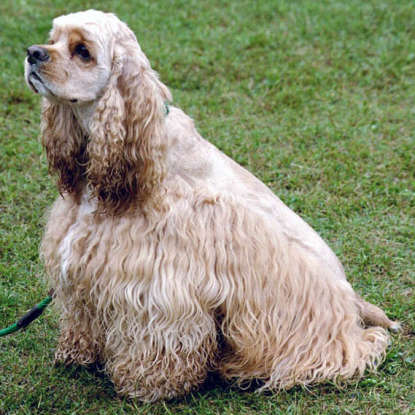 40. Which dog breed is this?