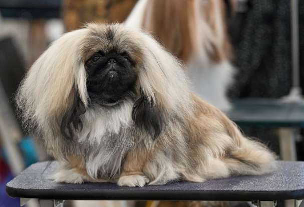 45. Which dog breed is this?