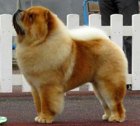 44. Which dog breed is this?
