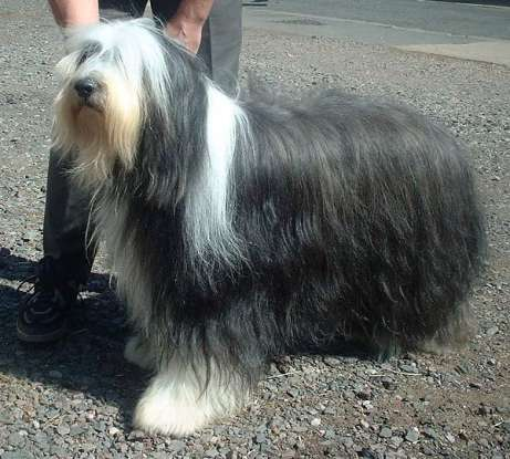 46. Which dog breed is this?