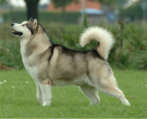 48. Which dog breed is this?