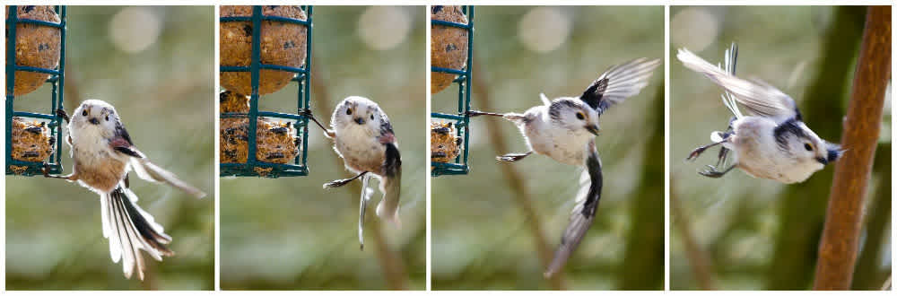 Time lapse of a bird leaving a caged suet feeder