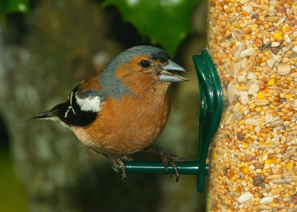 Small bird eats yellow seeds from a clear feeder