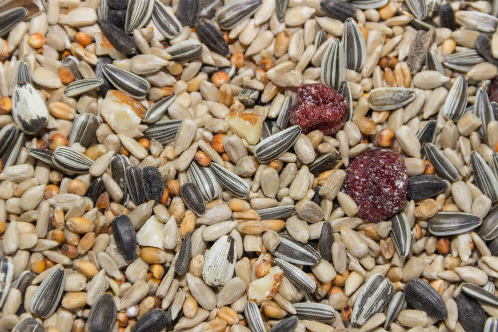 Bird feed with lots of striped sunflower seeds and some fruit