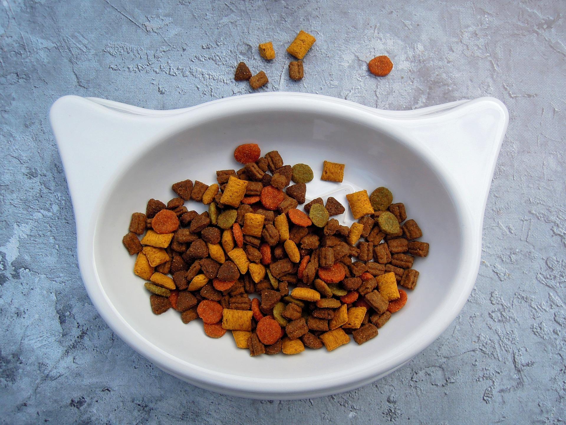 Bowl shaped like a cat full of dry food