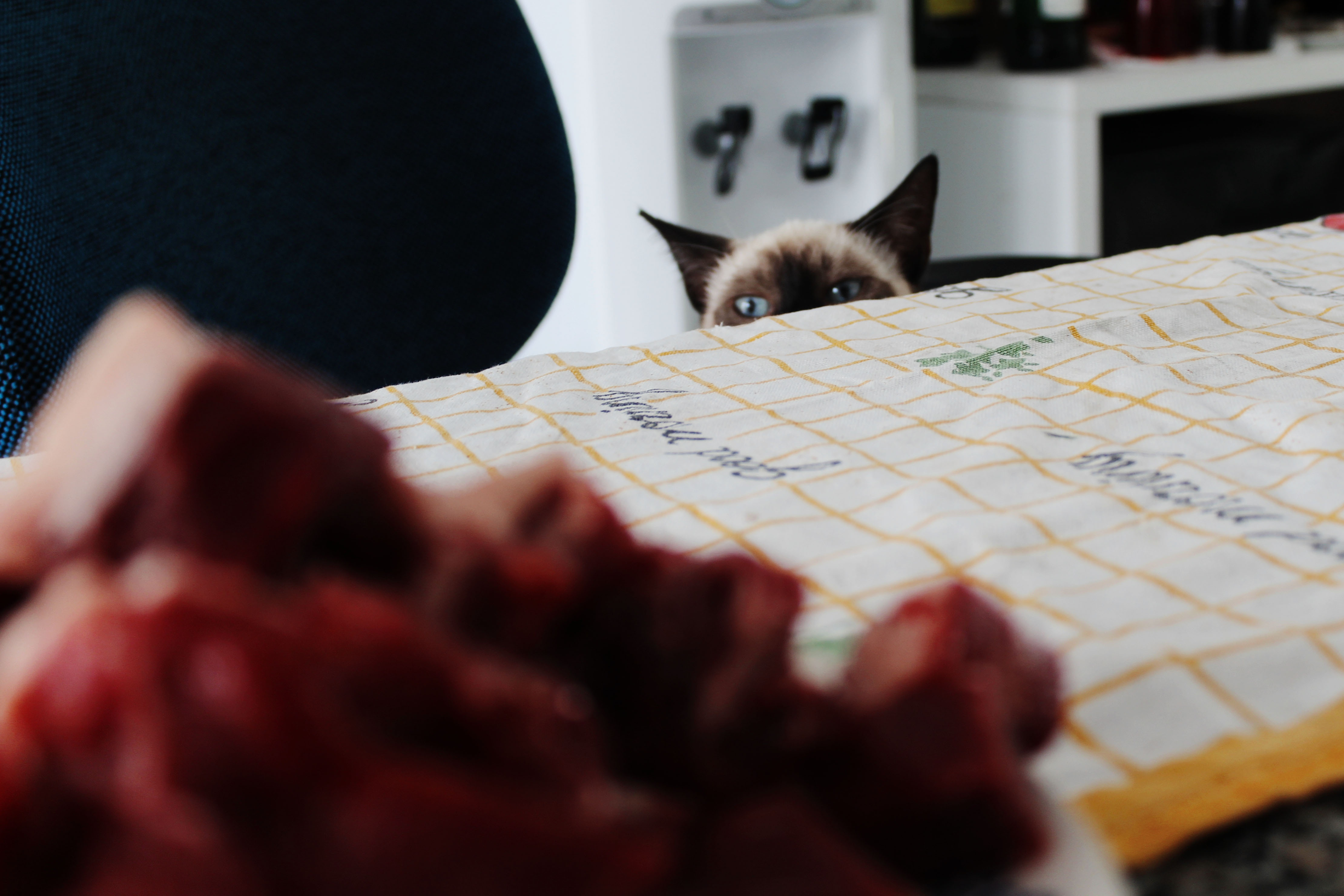 Cat looking over table top to see meat