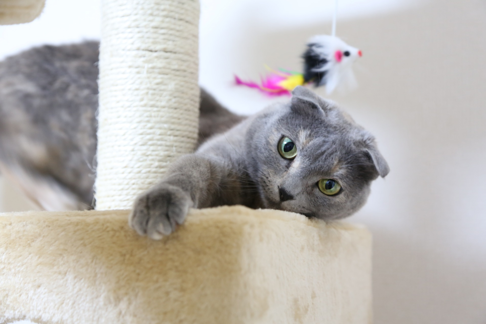 Cat playing with toys on a cat tower