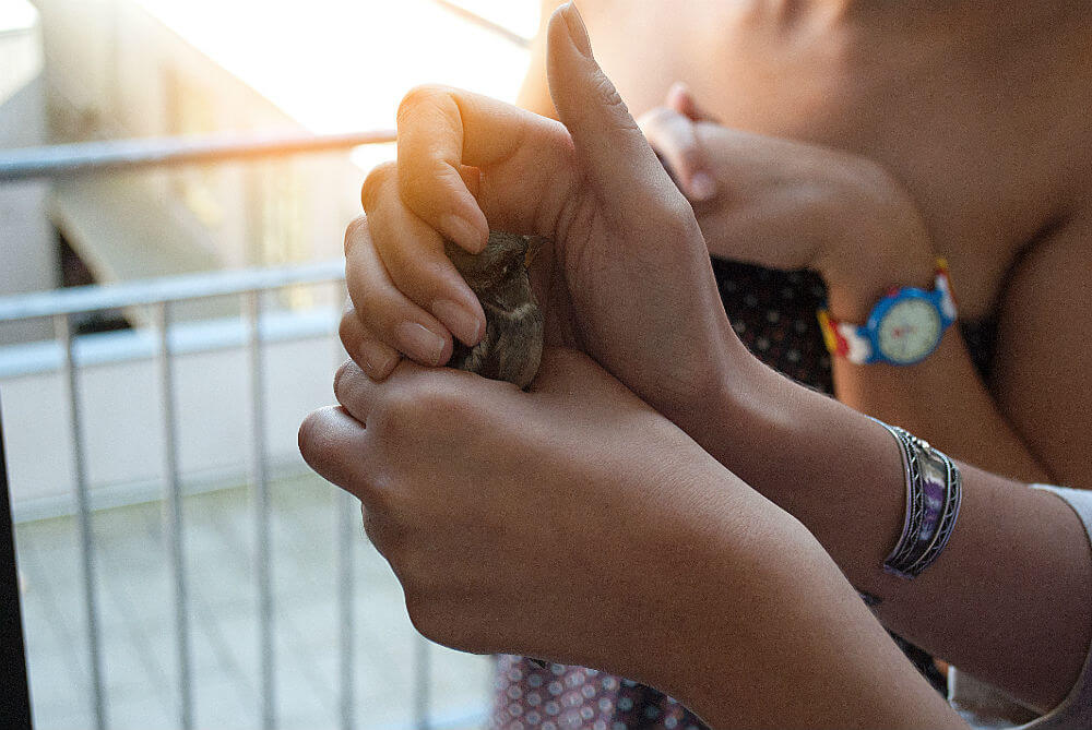 A person cups a small bird in their hands