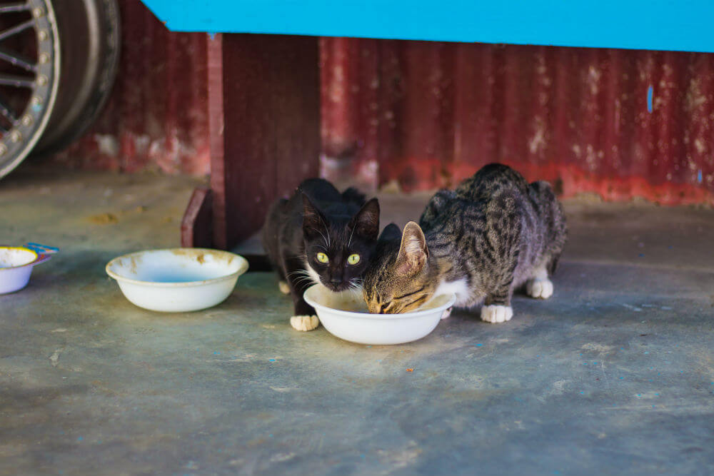 Two cats eat out of a white bowl
