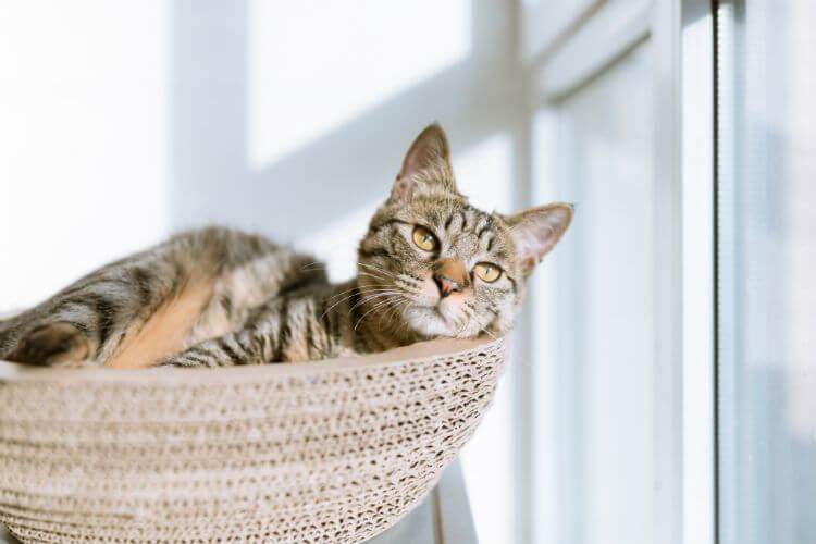 Cat in a basket by a window