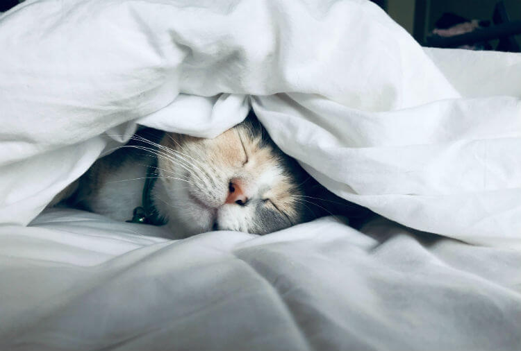 Cat sleeping cozily inside bed sheets