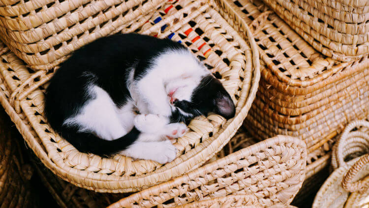 Black and white cat sleeps on wicker basket