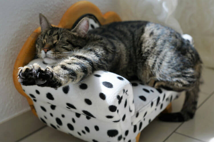 Cat stretching on spotted cat sofa