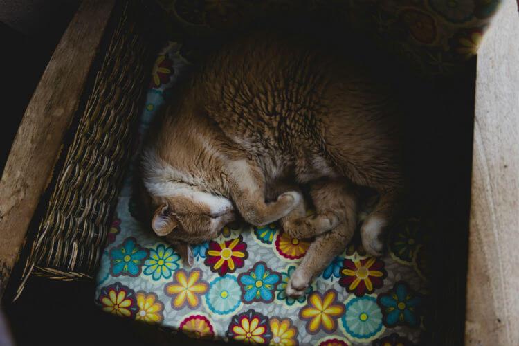 Cat sleeps in a wicker basket