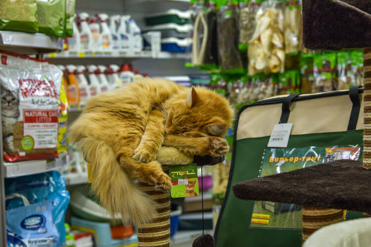 An orange cat sleeps on top of cat tower in a pet store