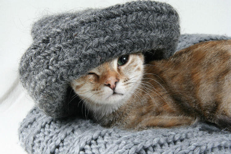 A gray, brown, and white cat cuddles in a gray knit scarf