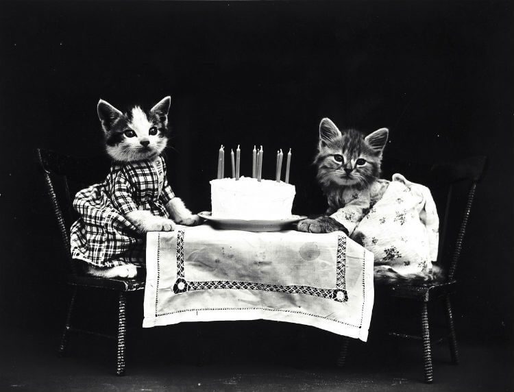 Two kittens in dresses sit at a table with a birthday cake