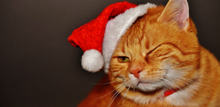 A winking orange cat wears a red Santa hat