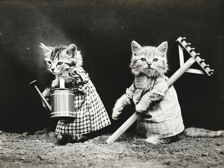 Two kittens dressed as farmers with a rake and pale