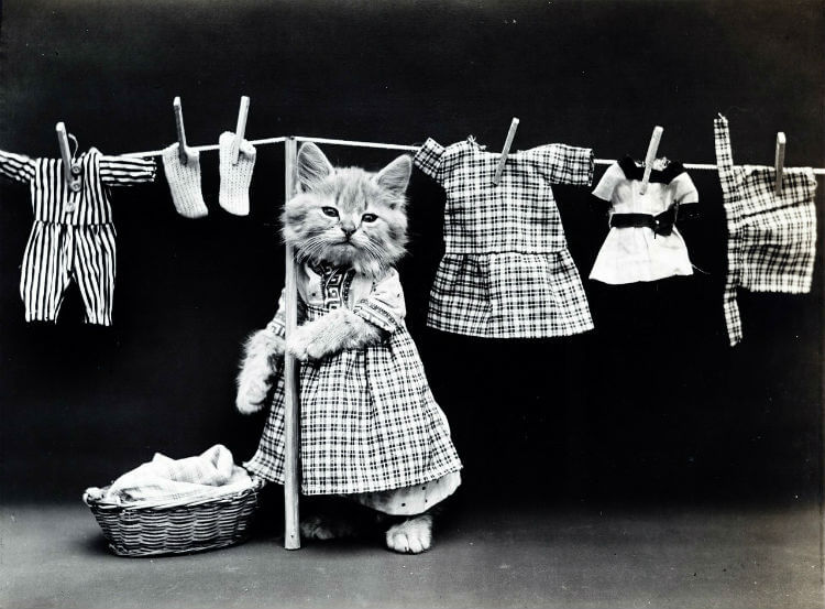 A standing kitten in a dress puts clothes on a line to dry