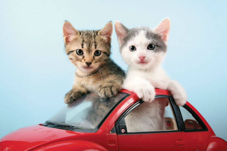 Two kittens in a red toy car