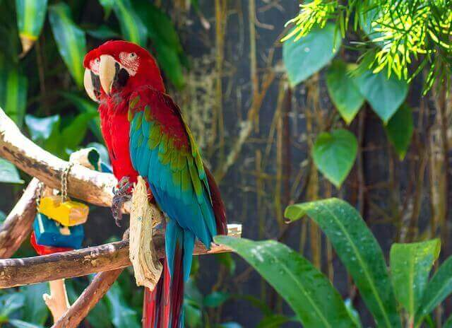 A colorful parrot perches in an outdoor aviary