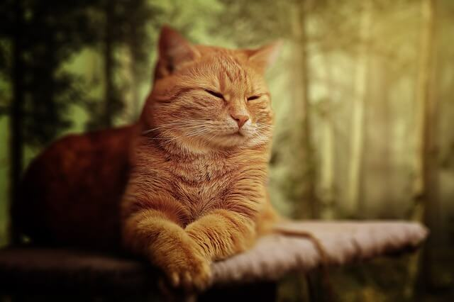 An orange cat snoozes outside