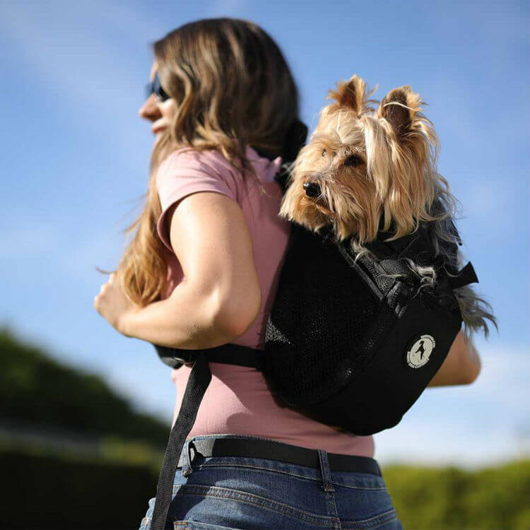 A woman carries a Yorkie in a black backpack