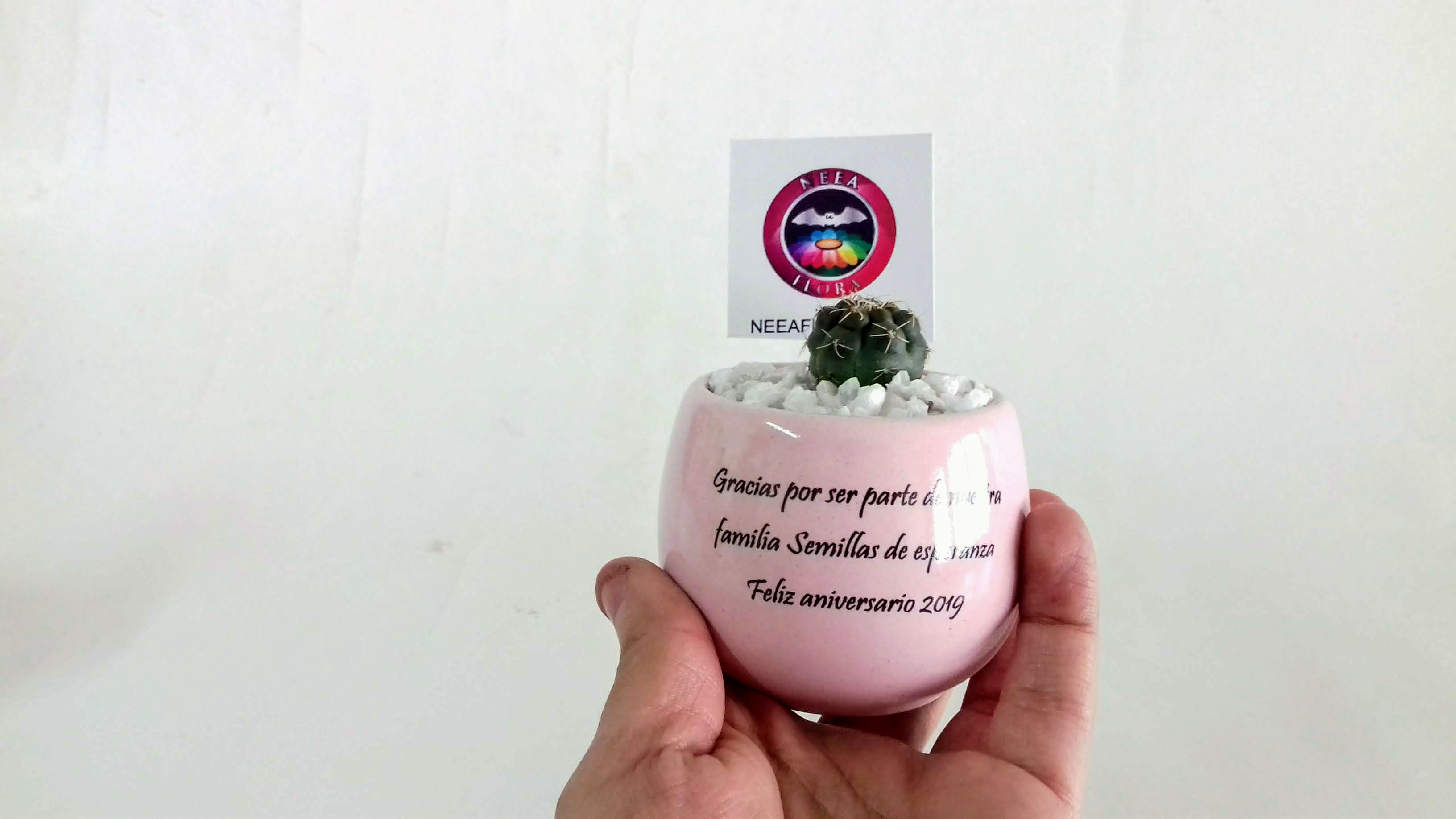 Cactus matera cerámica horneada con mensaje personalizado recordatorios