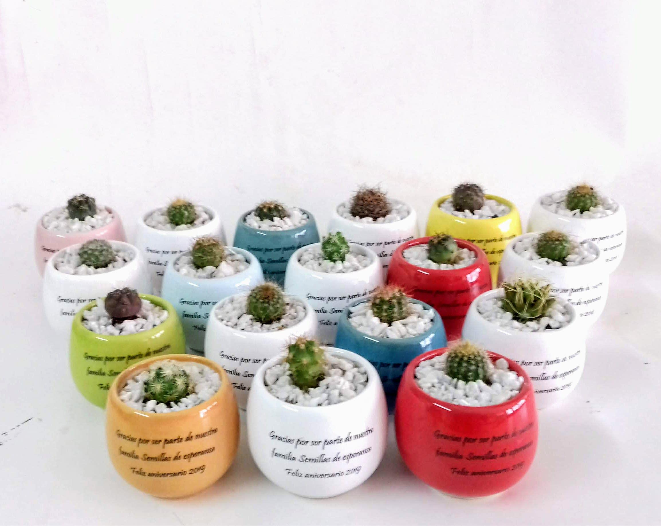 Cactus materas cerámica personalizadas mensaje recordatorios