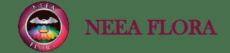 Neea Flora – Plantas para Regalar | Recordatorios con cactus y suculentas | Cursos y talleres