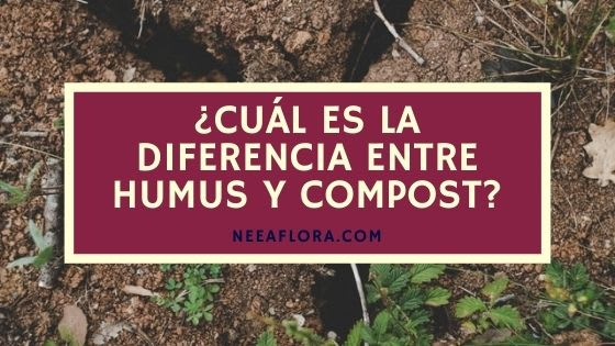 ¿Qué es el humus? y ¿Cuál es la diferencia entre compost y humus? - Blog Neea Flora