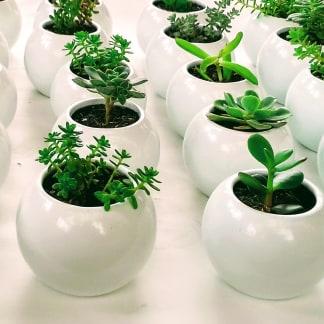 Suculentas materas cerámica resinadas