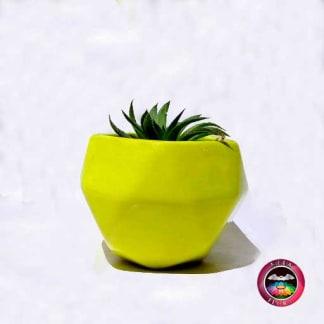 Suculenta matera cerámica geométrica verde Neea flora