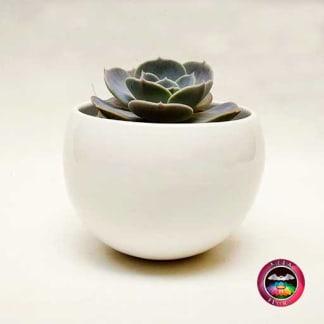 Suculenta matera cerámica esfera grande