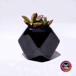 Suculenta matera cerámica geométrica polígono