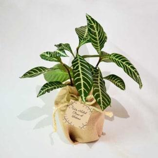 Planta de interior bolsa yute tarjeta personalizada