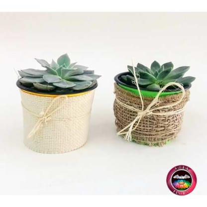 Suculentas matera plástica yute rústico y fino 9cm recordatorios diagonal Neea Flora