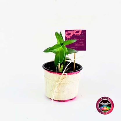 Suculentas recordatorios matera plástica yute 9cm con tarjeta Neea Flora