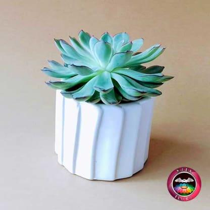 Suculenta 9cm matera cerámica tuerca blanca diagonal fondo