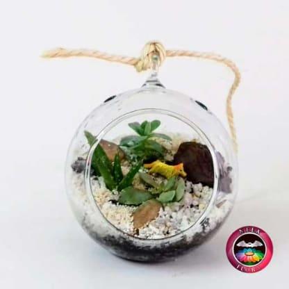 Terrario colgante gota redonda vidrio suculentas pequeño frontal Neea Flora