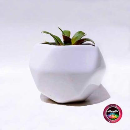 Suculenta maceta cerámica geométrica blanca Neea flora