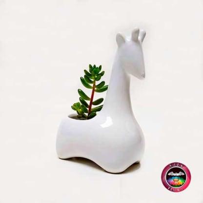 Suculenta matera cerámica animales jirafa angulada