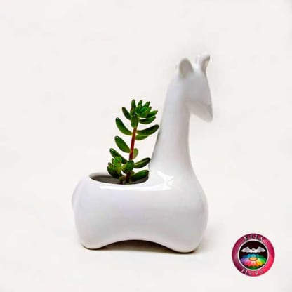 Suculenta matera cerámica animales jirafa angulada lateral Neea Flora