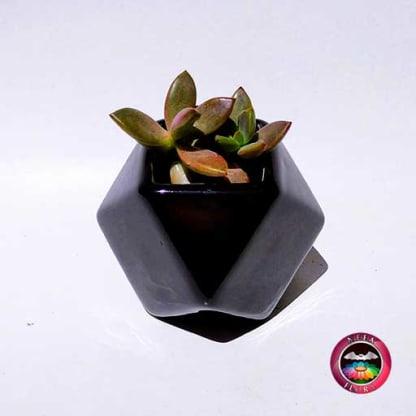 Suculenta maceta cerámica geométrica polígono negro Neea Flora