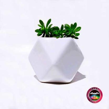 Suculenta matera cerámica geométrica polígono blanco Neea Flora