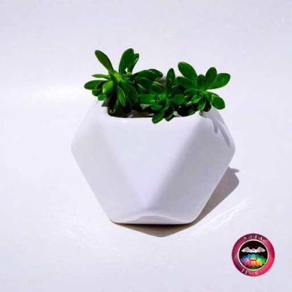 Suculenta maceta cerámica geométrica polígono blanco Neea Flora