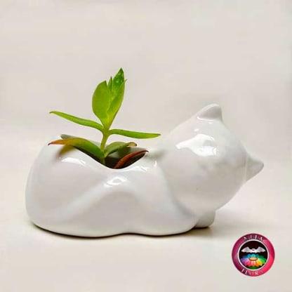 Suculenta matera cerámica animales gato acostado frontal Neea Flora